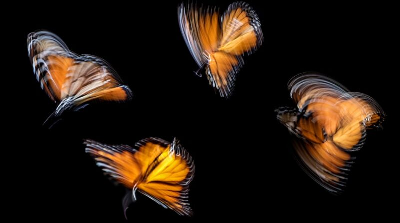 Orange and Black Butterfly Meaning